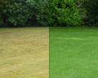 шрамирование, методы, советы, сад, декор, растения, газон, трава, уход