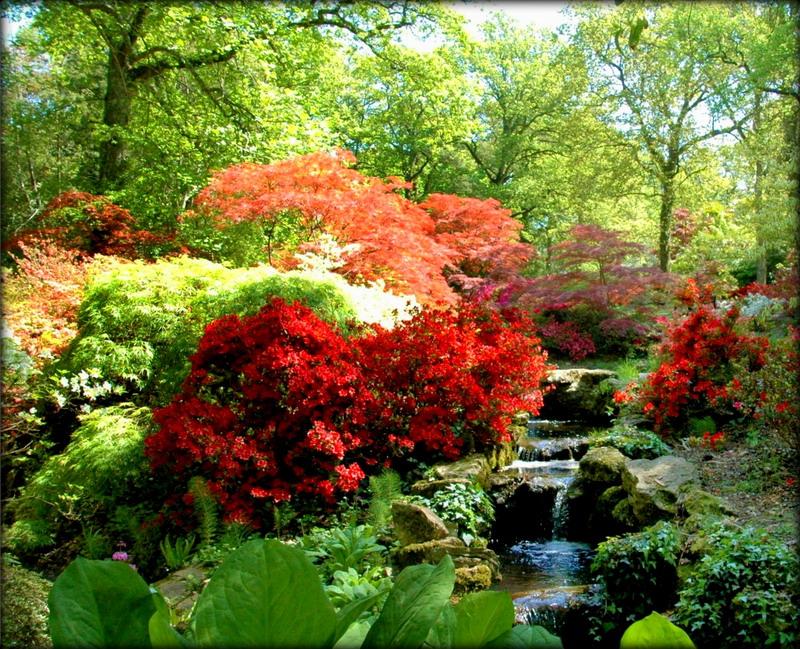 azalea-rododendron-1