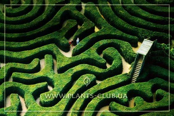 Садовые зеленые лабиринты в ландшафтном дизайне, фото