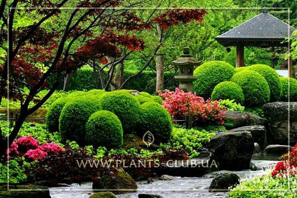 сады персии фото